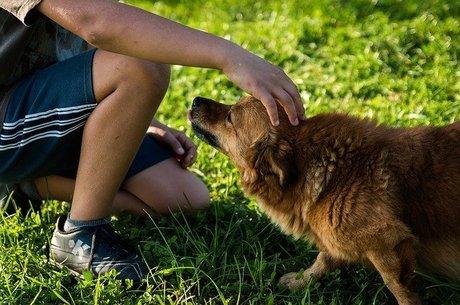 Abrace mais o seu cão, eles adoram!