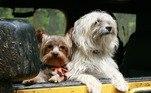 O cinto específico para cachorros funciona como um extensor para ser acoplado ao banco