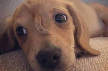 É um cachorro? É um unicórnio? É Narwhal!
