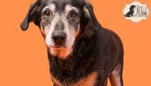 SP: Estação Paraíso recebe doação de ração e promove adoção de pets