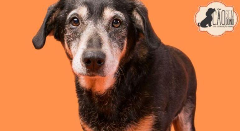 Maylon, de 11 anos, disponível para doação pela Cão Sem Dono