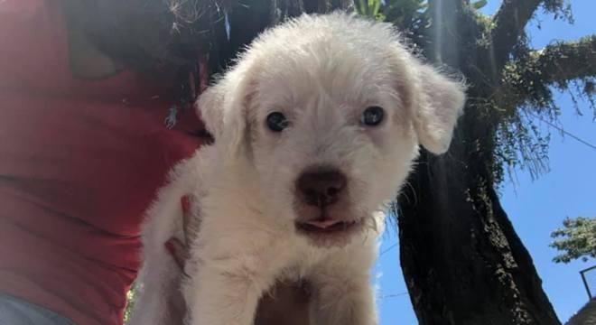 Apelidado Enem, cachorro foi adotado no dia da prova