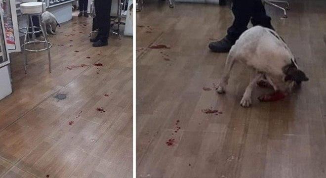 Imagens registraram o cachorro sangrando em uma loja dentro do supermercado