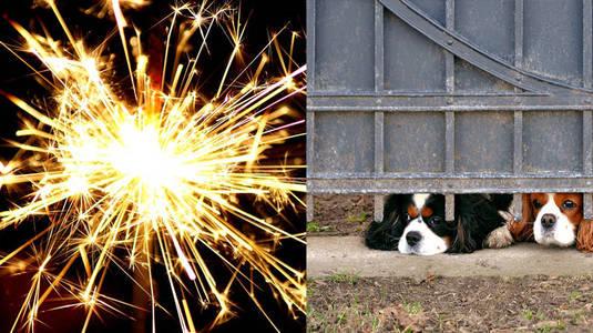 Número de animais desaparecidos cresce com as festas de fim de ano