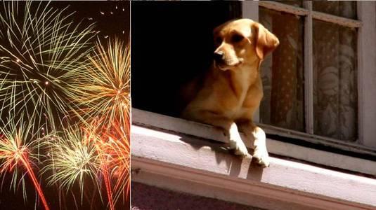 Réveillon é o pior data do ano para os animais de estimação (Reprodução/Free Images)