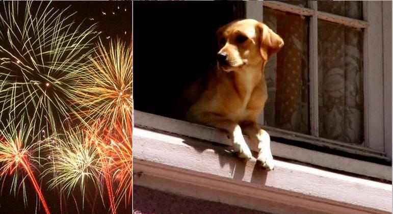 Animais sofrem com queima de fogos durante as festas de fim de ano