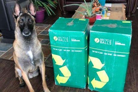 O cão logo percebeu o que tinha dentro das caixas