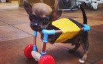 A medida serviu enquanto Turbo não crescia o suficiente para uma cadeira de rodas de verdade