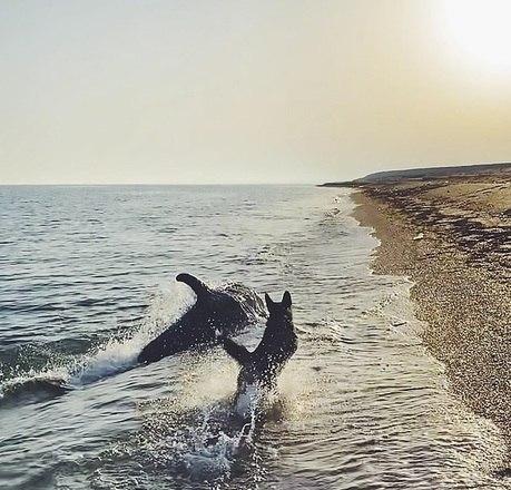 Anastasia Vinnikova estava com seu cão, Patrick, na praia de Opuk, na Crimeia (um território disputado entre Rússia e Ucrânia), quando a brincadeira começou. Um golfinho vinha do mar para a orla e interagia com Patrick, como velhos amigos