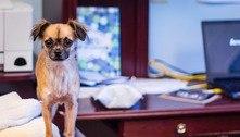 Veja 7 dicas para conciliar a rotina do cachorro e o home office