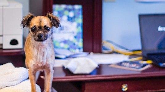 Veja 7 dicas para conciliar a rotina do cachorro e o home office (Pixabay)