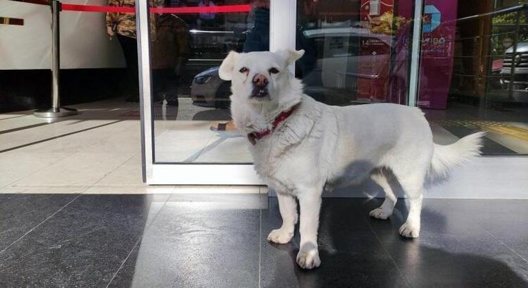 Cachorro ia todos os dias até a porta do hospital esperar pelo seu tutor