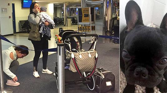 Cão morre em voo após ser trancado no compartimento de malas