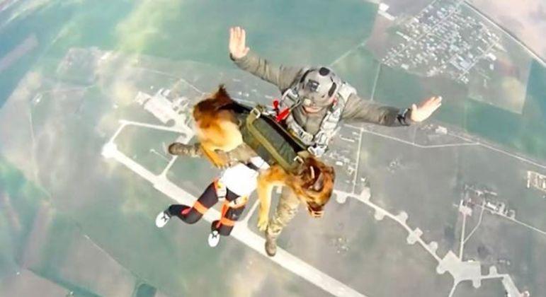 Cães pularam de uma altura de 3,9 km em teste militar de paraquedas