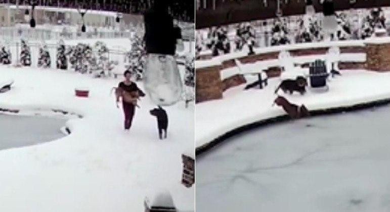 Cachorro caiu em uma piscina congelada, onde ficou mais de 1 minuto sob o gelo