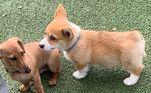 David conta ainda que, antes do abraço, o cãozinho se certifica de que o amigo canino está bem com a demonstração de carinho. Quando o outro cachorro mostra que está com medo, Wallace dá apenas beijos, sem invadir muito o espaço