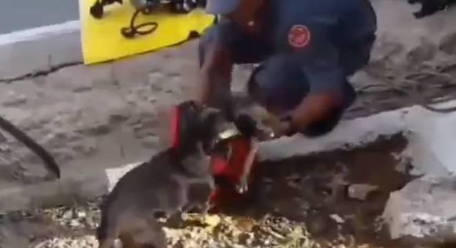 Imagem mostra o desespero da mãe do filhote, que aguardava o resgate