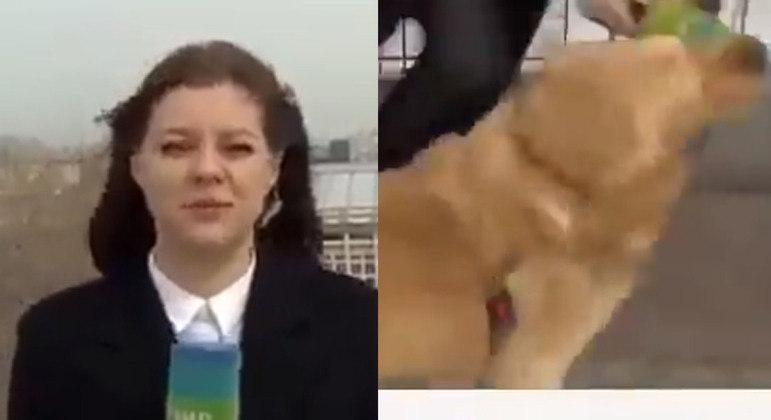 Flagra do momento em que o cachorro interrompe transmissão ao vivo e rouba microfone