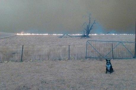 O fogo chegou rapidamente à fazenda, mas Patsy foi mais rápida ao salvar as ovelhas da família