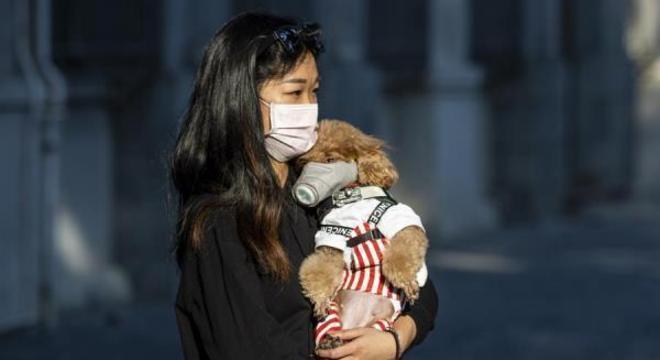 Segundo especialista, usar máscara em animais de estimação não é eficaz