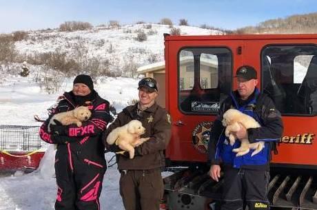 Cachorrinhos foram encontrados em carcaça de ovelha