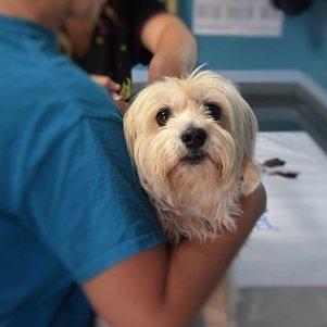 É importante promover a ida preventiva ao veterinário para que o especialista possa acompanhar a saúde do animal
