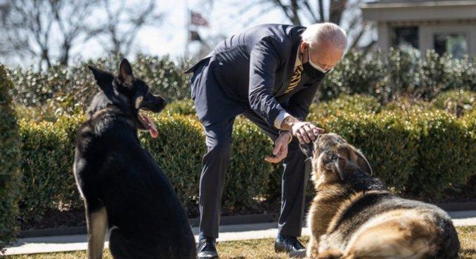 Funcionário mordido por cachorro de Biden teve ferimentos leves