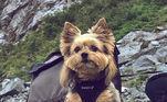 De acordo com os fundadores da página dedicada aos cachorroscom mullets, a ideia foi homenagear a tendência de estilo ditada pelos humanosaos pets
