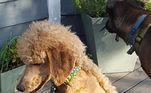 A tendência tem se propagado nas redes sociais por conta dapágina Dogs with Mullets (cachorros com mullets, em tradução livre) e já possuicentenas de milhares de fãs