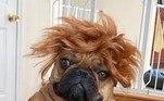 Alerta de bad hair day! Talvez seja melhor optar por uma chapinhaVeja mais:Tropa canina da Guarda Municipal do Rio ganha reforço com 8 filhotes