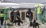 Americanos ou não, agora a prioridade para Azizi e seus colegas é preparar a equipe canina para a próxima reabertura do aeroporto.'Nós os treinamos para ver o que podem fazer exatamente', disse Azizi, explicando que percebeu que eram 'cães rastreadores de explosivos'