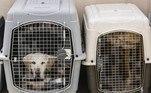 O Pentágono rejeitou essas acusações e afirmou que as fotos publicadas nas redes sociais mostravam cachorros de um abrigo afegão, e não os animais sob a responsabilidade do Exército americano