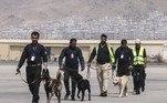 A maioria dos cães, alguns deles treinados para rastrear explosivos, foi encontrada, segundo seus novos donos, na seção do aeroporto controlada pelo Exército dos Estados Unidos, que abandonou o Afeganistão em 30 de agosto, após 20 anos no país