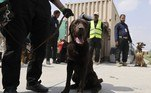 'Quando vi que [os soldados americanos] iam embora, vim para salvar os cachorros', disse à AFP Hewad Azizi, funcionário de uma empresa encarregada da segurança no aeroporto