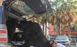Alguns se parecem com ursos por causa de sua grossa pelagem somada ao tamanho incomumLeia mais:Cachorra roubada há 6 anos se reencontra com família
