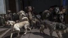 Resgate de animais aumenta 32% em SP no 1º trimestre deste ano