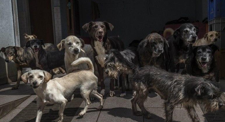 Animais foram resgatados em operações contra maus-tratos e tráfico de animais silvestres