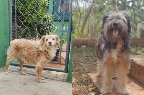 """""""Cachorros no Zoom"""": a feira de adoção online"""