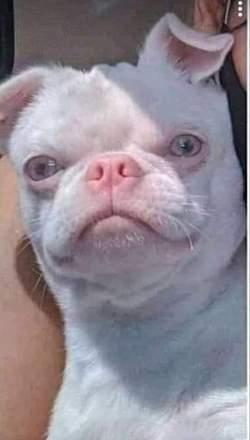 'Só eu que achei esse cachorro a cara do Fábio Assunção', escreveu a usuária@dudaazanfolin no Twitter