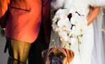 Eles parecem tão comportados durante a cerimôniaLeia também:Resgatada em estado terminal, cadela curte últimos dias de vida