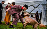 Quem disse que só os humanos se divertem nas festas?Veja mais:Desafio reúne fotos de pets dormindo de um jeito muito estranho