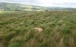 Segundo o tabloide britânico Daily Star, o corpo do animal foi fotografado porAlbert Tyas, cidadão que passeava pela região no início de julho. ATENÇÃO: IMAGENS FORTES A SEGUIR!
