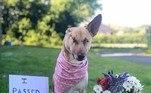 Depois de se estabelecer em sua nova família, Maggie ainda encontraria uma missão para lá de especial: ser um cão de terapia e ajudar outras pessoas a passarem por momentos difíceis