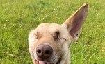 O resgate e adoção foram feitos com a ajuda da Wild At Heart Foundation, organização que atua pelo bem-estar dos animais e trabalhou para que os cães feridos durante as explosões no Líbano pudessem receber os cuidados necessários