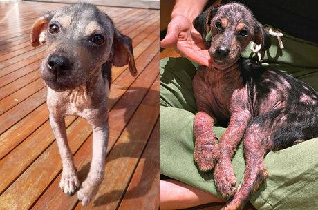 Cadelinha resgatada por Gio e Bruno se recupera bem