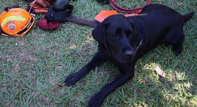 A cadela Sarah, que recebeu homenagem pelos cinco anos de trabalho