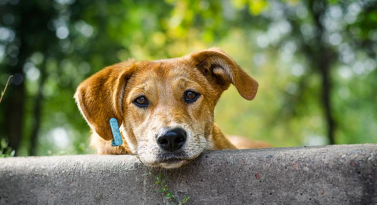 Após ação de ONG, pelo menos 15 cães 'órfãos' foram adotados