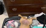 Hora do cochilo ou do drama? Esse cão se jogou na mala de viagem da tutora: