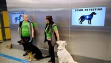Cães são usados para identificar viajantes com covid na Finlândia