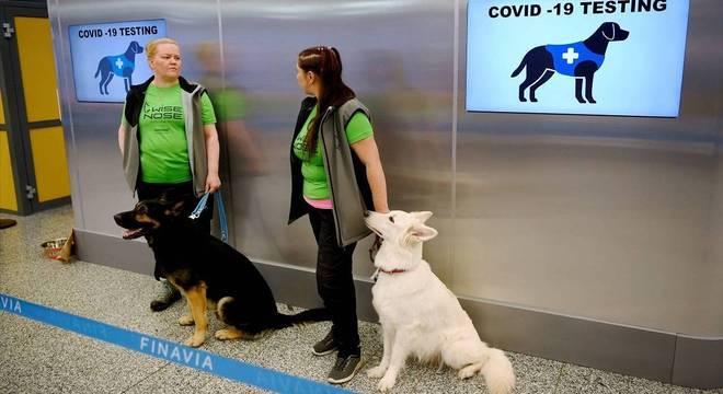 De 10 a 15 cães farejadores serão usados no projeto